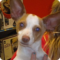 Adopt A Pet :: Mr Ears - Fresno, CA