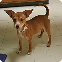 Adopt A Pet :: Embry - Lawrenceville, GA
