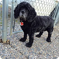 Adopt A Pet :: Molly 6yr Adopted - Mentor, OH