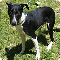 Retriever (Unknown Type) Mix Dog for adoption in Livingston, Texas - Adan