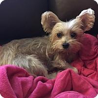 Adopt A Pet :: Blanche - Baton Rouge, LA