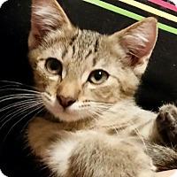 Adopt A Pet :: ♥ Robin *Adoption Pending* ♥ - Middleburg, FL