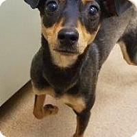 Adopt A Pet :: Sadie #165914 - Apple Valley, CA