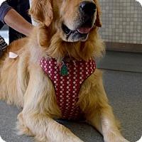 Adopt A Pet :: Maya #0610 - Fort Worth, TX