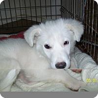 Adopt A Pet :: Macademia - Mexia, TX