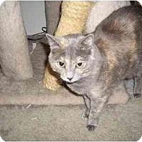 Adopt A Pet :: Mindy - Hesperia, CA