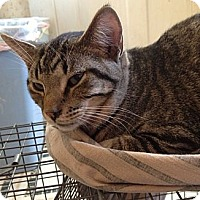 Adopt A Pet :: Sam - Troy, OH