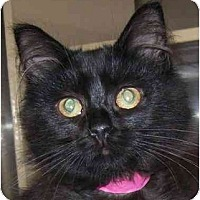 Adopt A Pet :: Charm - Annapolis, MD