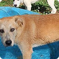 Adopt A Pet :: Peaches - Allentown, PA