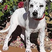 Adopt A Pet :: Monica - Gilbert, AZ