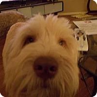 Adopt A Pet :: Bentley - Apex, NC