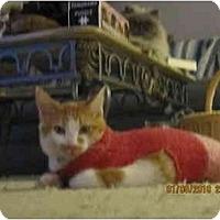 Adopt A Pet :: Simon - Los Angeles, CA