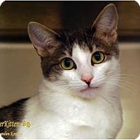 Adopt A Pet :: Gwyneth - Encinitas, CA