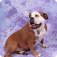 Adopt A Pet :: Memphis - Decatur, IL