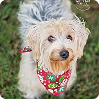 Adopt A Pet :: Rookie - Kingwood, TX