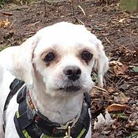 Adopt A Pet :: Magnolia - London, ON