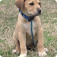 Adopt A Pet :: Marley - parissipany, NJ