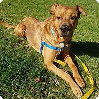 Adopt A Pet :: Zilla - Detroit, MI