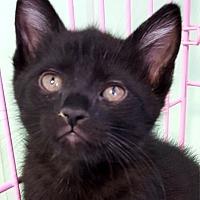 Adopt A Pet :: Oscar - Key Largo, FL