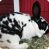 Adopt A Pet :: Nagel - Elyria, OH