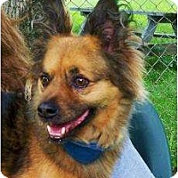 Adopt A Pet :: Bruce - Antioch, IL