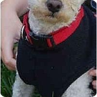 Adopt A Pet :: Jax - La Costa, CA