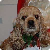 Adopt A Pet :: Liberty - Ogden, UT