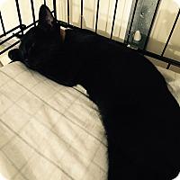 Adopt A Pet :: Oksana - Speonk, NY