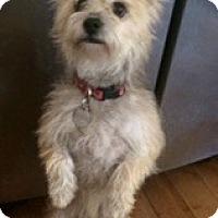 Adopt A Pet :: DK - Scottsdale, AZ