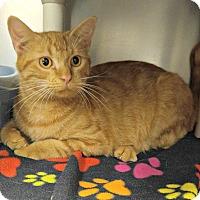 Adopt A Pet :: T-4 - Triadelphia, WV