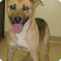 Adopt A Pet :: Shemp - Gary, IN