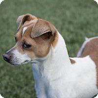 Adopt A Pet :: Martin - Chula Vista, CA