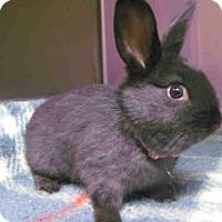 Adopt A Pet :: *JUDY HOPPS - Norco, CA
