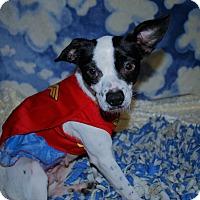 Adopt A Pet :: Moo - Waupaca, WI