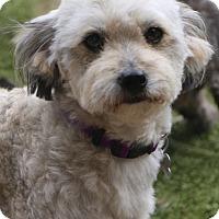 Adopt A Pet :: Jazz - Woonsocket, RI