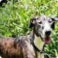 Adopt A Pet :: Maxter - Houston, TX