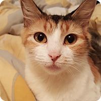 Adopt A Pet :: Nicole - Smithfield, NC