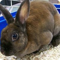 Adopt A Pet :: Buttercup - Harrisburg, PA