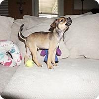 Adopt A Pet :: Rikkon - Portland, OR