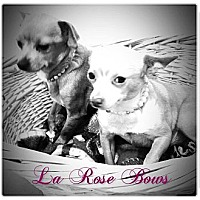 Adopt A Pet :: Lisa - Poughkeepsie, NY