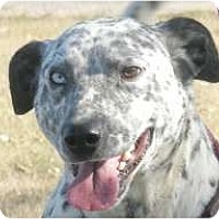 Adopt A Pet :: Simon - Turlock, CA