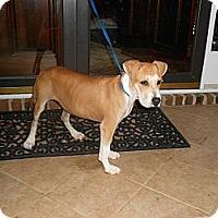 Adopt A Pet :: ANDY - Wakefield, RI