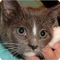 Adopt A Pet :: Lilly - Riverside, RI