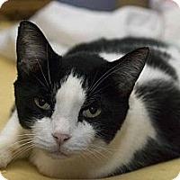 Adopt A Pet :: Jasper - New Port Richey, FL