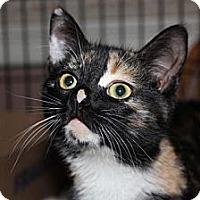 Adopt A Pet :: Tinkerbell - Westfield, MA