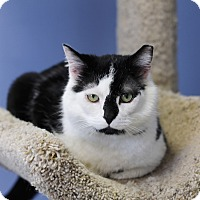 Adopt A Pet :: Patrick Patches - Chicago, IL
