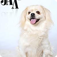 Adopt A Pet :: Jax - Frederick, MD