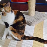 Adopt A Pet :: Cinnamon - Byron Center, MI