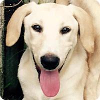 Adopt A Pet :: Prescott#3F - Orlando, FL