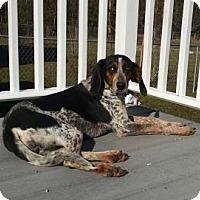 Adopt A Pet :: Dena - Richmond, VA